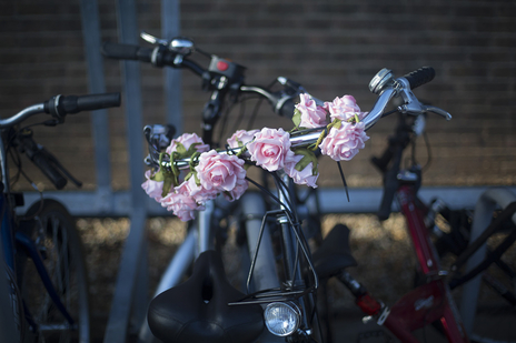 flowers wrapped around a handlebar, Dorset