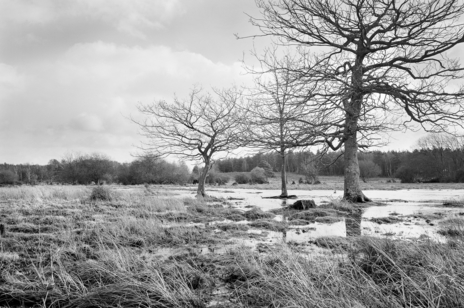 a black and white watery landscape photo showing bare trees