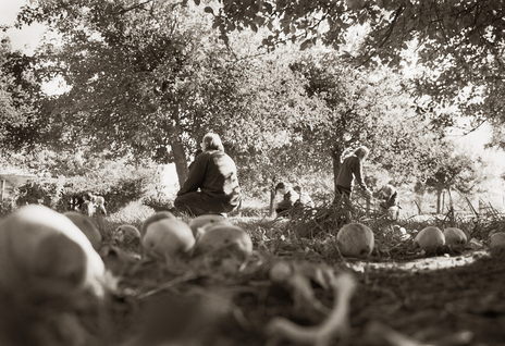 children sit in orchard contemplating apples