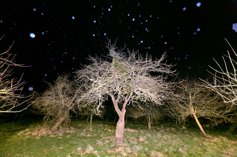 starry night photo apple tree in orchard