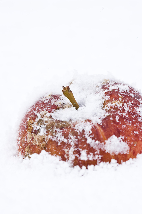 apple lying in snow photo