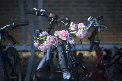photograph of flowers on a bike Dorset