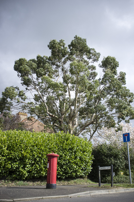 photo of tree blowing in high winds, Langport, Somerset
