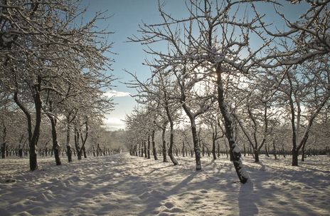 snowy orchard photo