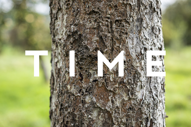 apple tree bark, suggestion of time and age, ageing.
