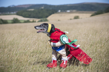 superhero dog